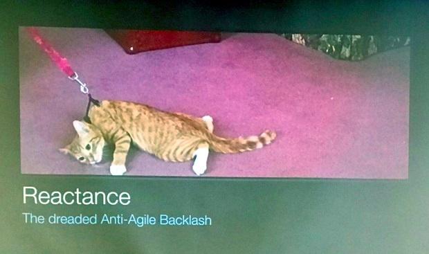 Simon Bennett demonstrating reactance in this image of a cat
